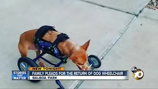 Family searching for Rexy's wheelchair - Video