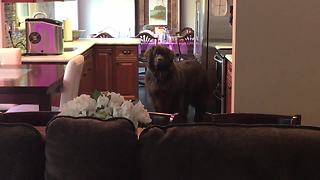 Counter-surfing dog gets caught in the act