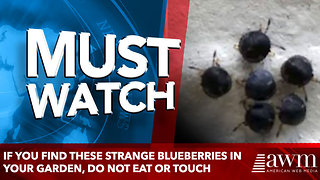 If You Find These Strange Blueberries In Your Garden, Do Not Eat Or Touch - Video