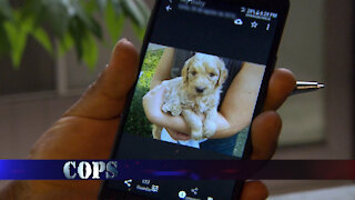 Puppy Love, COPS TV SHOW