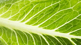 Heads Up: The CDC Says Romaine Lettuce Is Safe To Eat Again