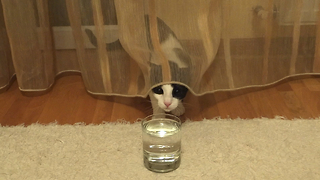 Cat Thoroughly Confused By Carbonated Drink Has The Purrfect Reaction - Video
