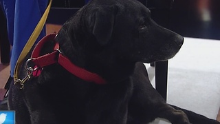Ask The Expert: Thanksgiving Pet Safety - Video