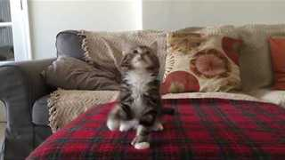 Dancing Kitten Loves Techno Music - Video
