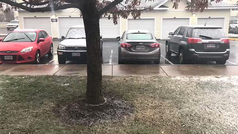 Timelapse Shows Snowfall Turn Grass From Green to White in Manassas, Virginia