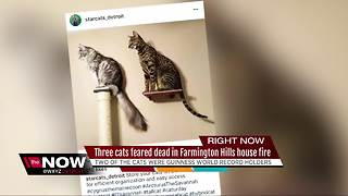 Record-breaking cats feared dead after metro Detroit house fire - Video