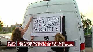 Michigan Humane Society heads to Houston to help animals in flood - Video