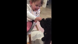 Little Girl Giggles As She Feeds Dog Her Dinner