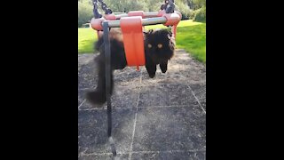 Cat on a leash chills out on park swing