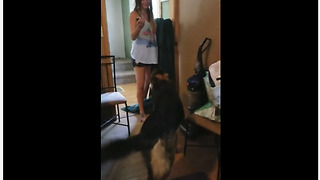 German Shepherd sabotages 'What The Fluff' challenge
