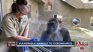 Vulnerable animals to coronavirus