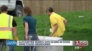 Authorities search site where 40 dogs were abandoned - Video