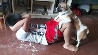 Dog helps owner work out during quarantine