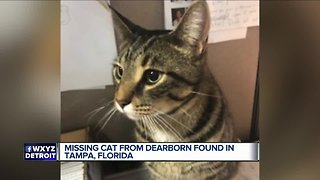 Missing Michigan cat somehow turns up in Tampa, Florida - Video