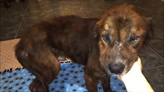 Beaten and abused dog saved from death - Video