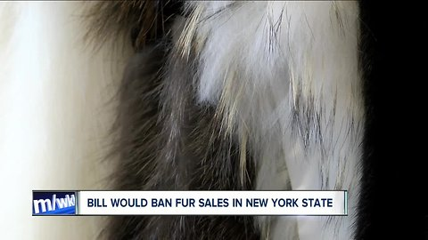 New proposal could ban the manufacture of fur in New York State
