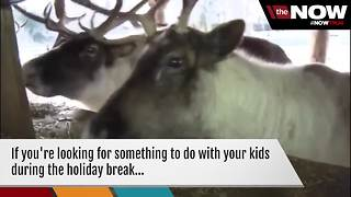 WATCH: Santa checks on reindeer helpers at the Milwaukee County Zoo