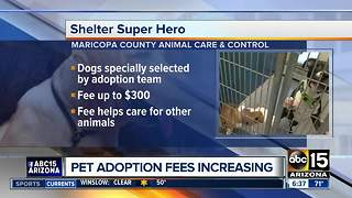 Maricopa County Animal Care and Control raising fees to pay for animal care - Video