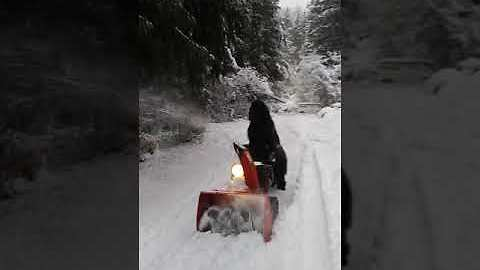 Helpful Newfoundland uses snowblower to clean driveway