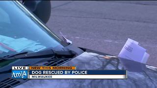 Milwaukee Police rescue dog abandoned in car for at least 4 days - Video