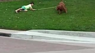 Dog Takes A Little Boy For A Walk - Video