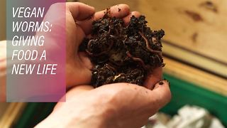 Opening up a box of worms - Video