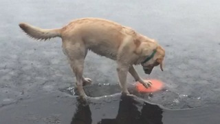 Adorable Dog Stands On Thin Ice - Video
