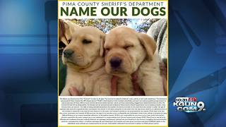 Help name the newest members of the Pima County Sheriff's Department - Video
