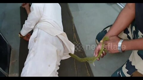 Snake rescued from the shirt of a sleeping man in an Indian hospital, without him waking up!
