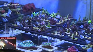 Business booms during pandemic for Copley coral farm