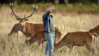 Photographer claims selfie-snapping tourists risking lives to get pics with wild deer