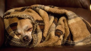 Just try not to fall in love with puppies rolling themselves into burritos - Video