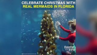 Christmas with mermaids at Weeki Wachee Springs | Taste and See Tampa Bay - Video