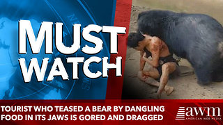 Tourist who teased a bear by dangling food in its jaws is gored and dragged - Video