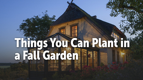 Things You Can Plant in a Fall Garden
