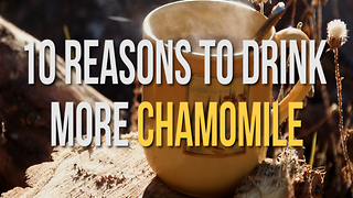 10 Reasons to Drink More Chamomile