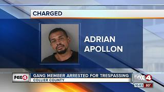 Gang Member Arrested for Trespassing - Video