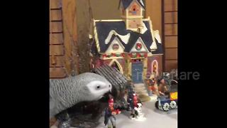 Parrot wreaks havoc in Christmas village - Video