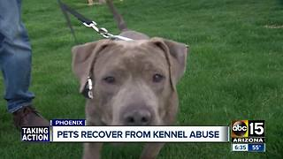 Pets recovering from kennel abuse will soon be up for adoption - Video