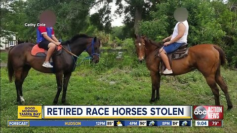 Retired race horses, trailer stolen from private property in Hillsborough County