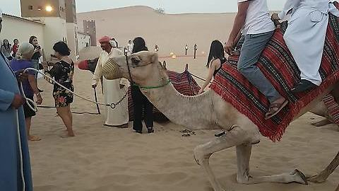 RIDING CAMELS AT THE GREAT DESERTS | DUBAI