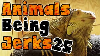 Animals Being Jerks #25 - Video