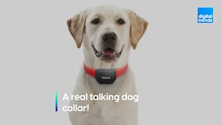 A real-life talking dog collar?!