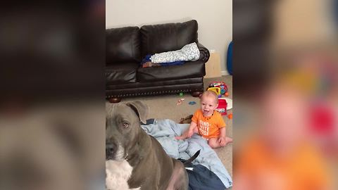 A Baby Boy Laughs At A Dog Catching Popcorn