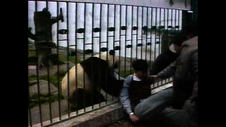 Panda Rips Off Man's Jacket - Video