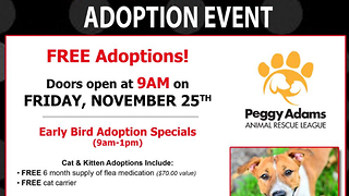 Peggy Adams Animal Rescue offers Black Friday adoption deals - Video