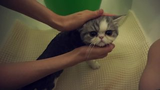 How to bathe a cat - Video