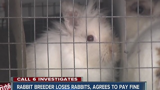 CALL 6: Rabbit breeder agrees to fines, surrendering animals - Video