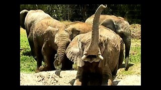 Mexican Zoo Rescues Orphaned Elephants - Video