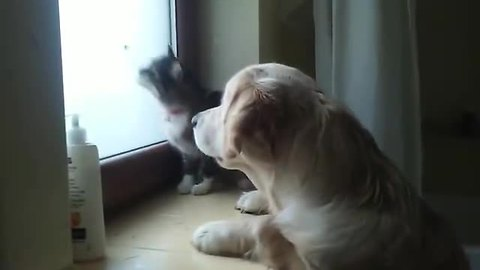 Puppy and kitten use teamwork to catch a moth